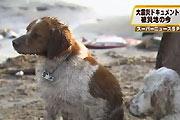 Tsunami slachtoffers