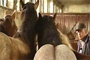Paardenflip