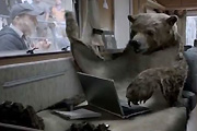 Bear rug director