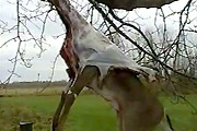 Deer skinning by truck