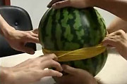 Japanese melon game