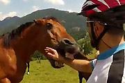Bitten by a wild horse