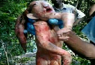 Weird Troll Creature Captured In Africa