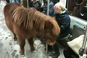 Subway pony