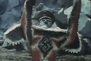 Hitler Starfish