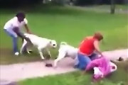 Woman Attacked By 2 Bulldogs
