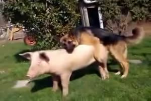Dog and Sow