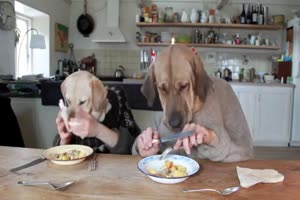 To Dogs Dining...