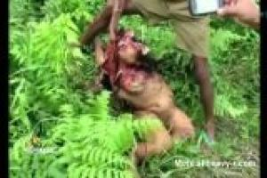 Mutilated Body Of Raped Girl