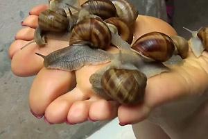 Snail Foot Tickling