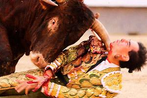 Toreador Gored By Bull