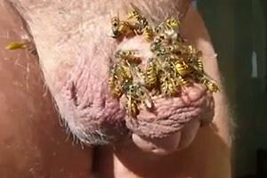 Honey Sweet Cock Wasp Covered