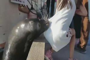 Sealion Snatches Girl