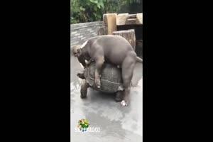 Polishing The Turtle