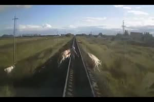 Farmer And Cow Killed By Train
