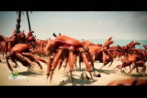 Red Crab Raving