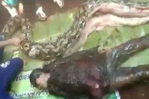 Man Cut From Dead Snake