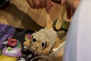Puppy For Dessert